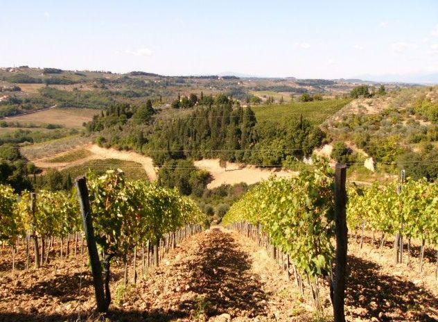 VILLA-POGGIO-ULIVI-Vineyards